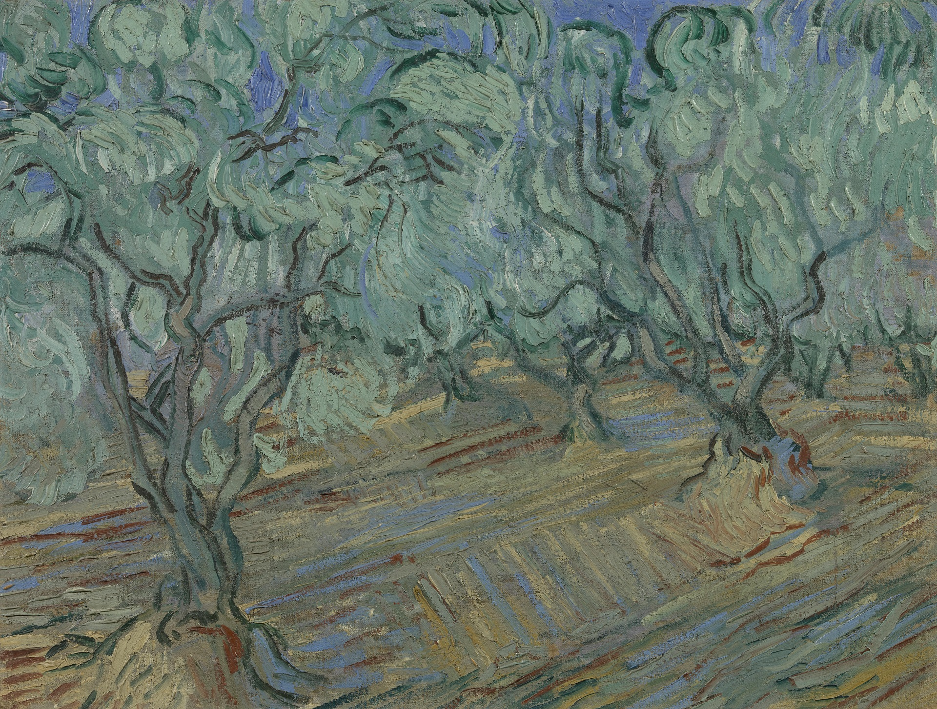Olive Grove: Bright Blue Sky 1889